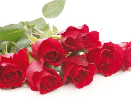 بالصور اجمل ورود الحب , صور ورود الحب الجميلة 3921 6