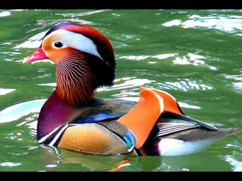 صور اجمل حيوان في العالم , تعرف على اجمل حيوان في العالم