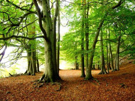 صور صور اشجار , خلفيات روعة اشجار