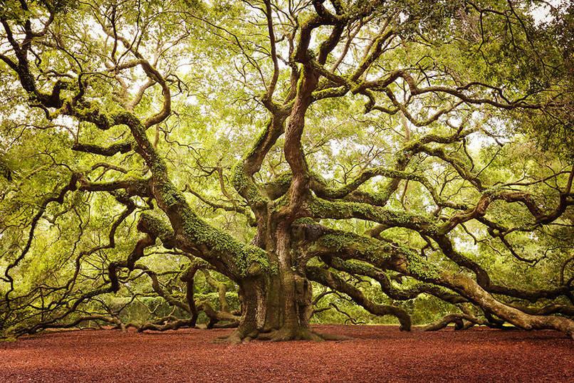 بالصور صور اشجار , خلفيات روعة اشجار