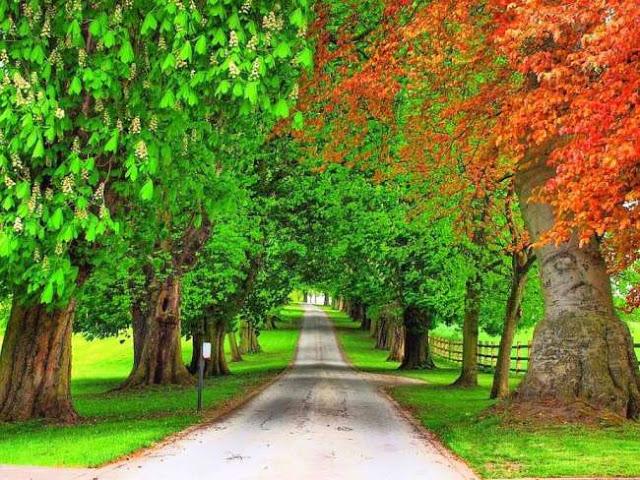 بالصور صور اشجار , خلفيات روعة اشجار 4044 6