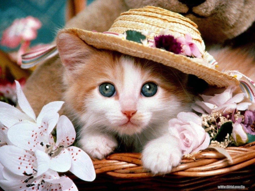 صوره خلفيات قطط , رمزيات قطط تجنن