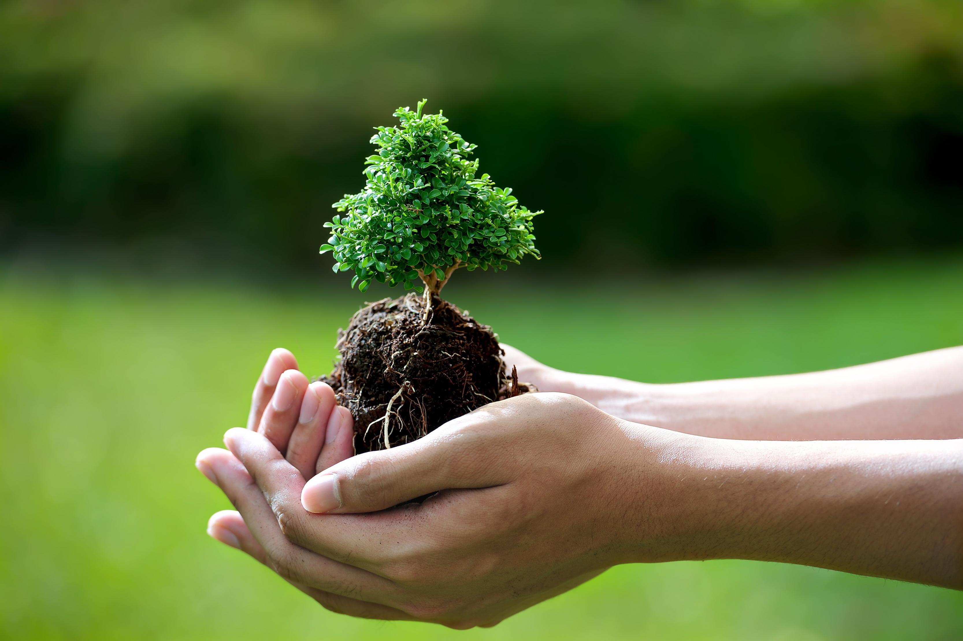 بالصور صور عن البيئة , خلفيات روعة عن البيئة 4188 9