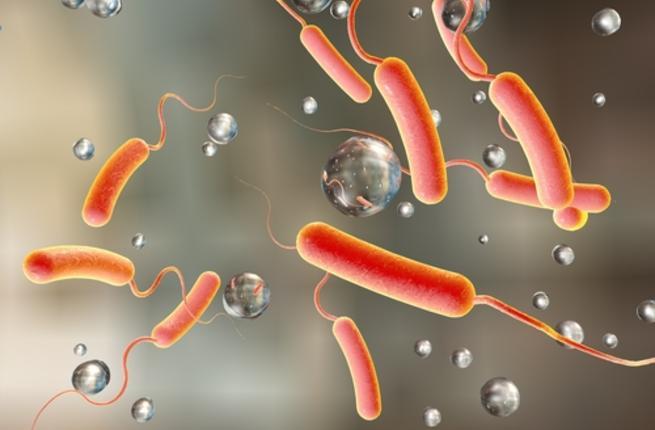 صوره مرض الكوليرا , معلومات عن مرض الكوليرا