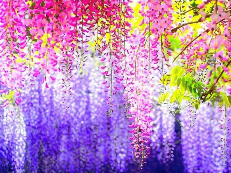بالصور صور اجمل الورود , صورة احلى الورود فى العالم 5136 10
