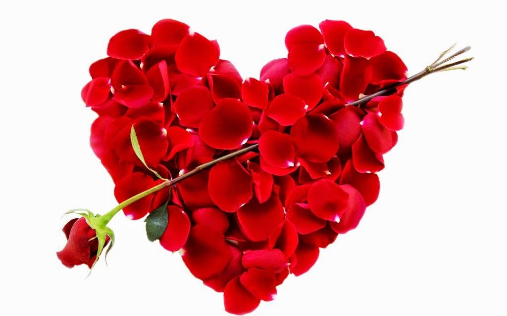 بالصور صور اجمل الورود , صورة احلى الورود فى العالم 5136 2