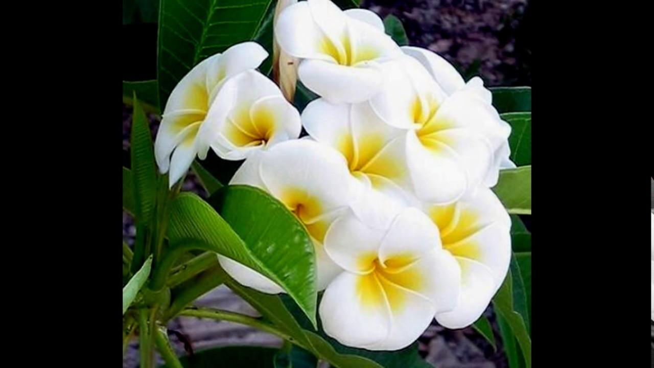 بالصور صور اجمل الورود , صورة احلى الورود فى العالم 5136 3