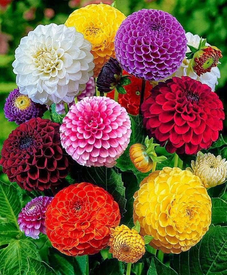 بالصور صور اجمل الورود , صورة احلى الورود فى العالم 5136 5