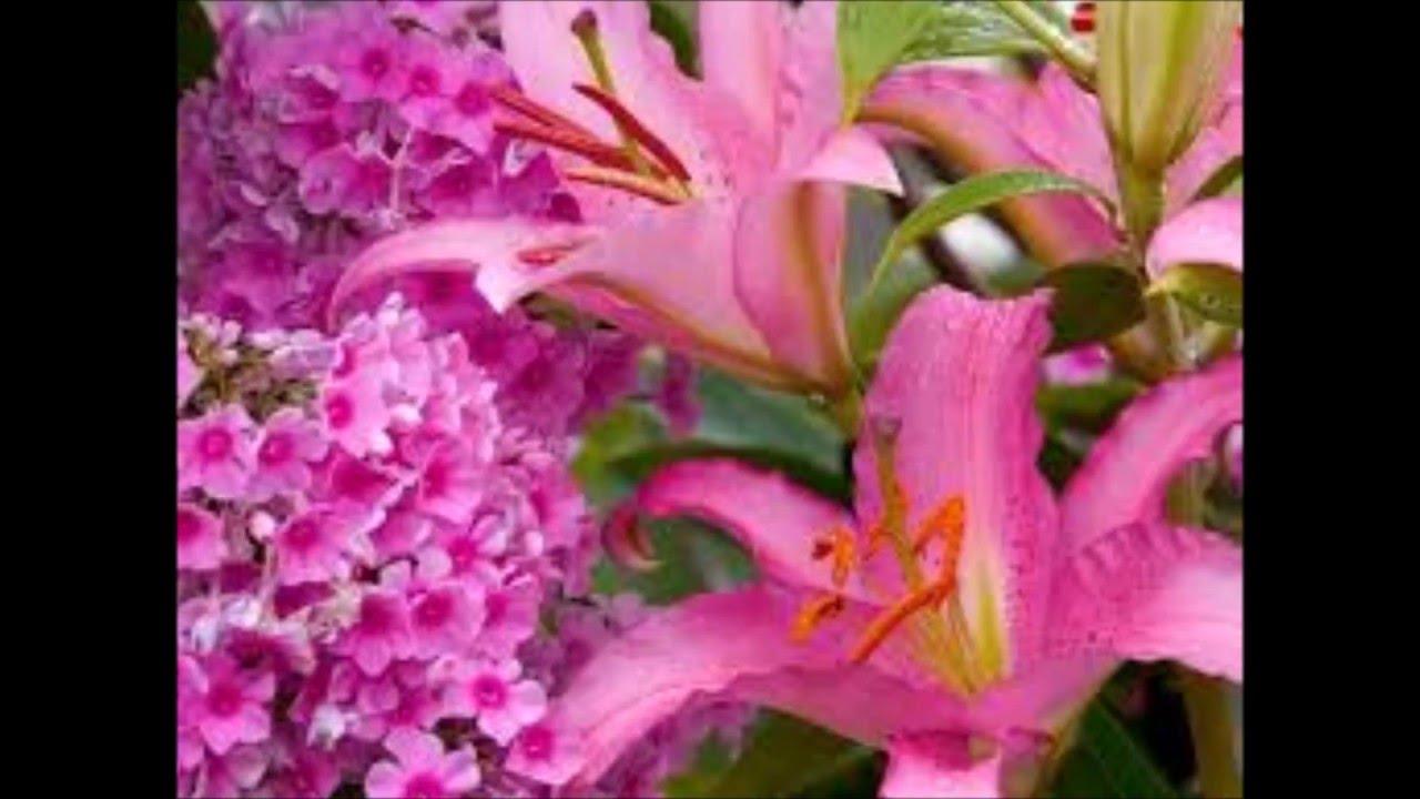 بالصور صور اجمل الورود , صورة احلى الورود فى العالم 5136 8