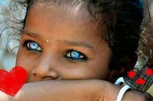 صور اجمل عيون في العالم , عيون جميلة من كل مكان فالكون