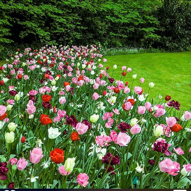 بالصور شعر عن الربيع , اجمل ابيات الشعر عن الربيع 5692 2