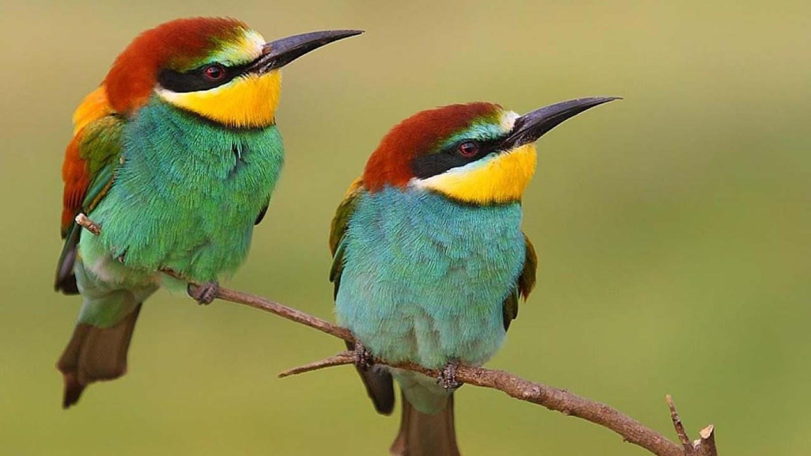 بالصور صور عصافير , اجمل صور عصافير ملونه 5696 1