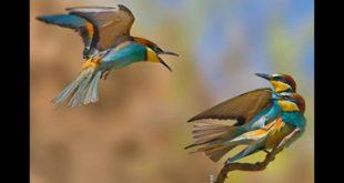 صوره صور عصافير , اجمل صور عصافير ملونه
