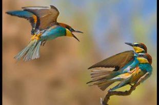 صور صور عصافير , اجمل صور عصافير ملونه