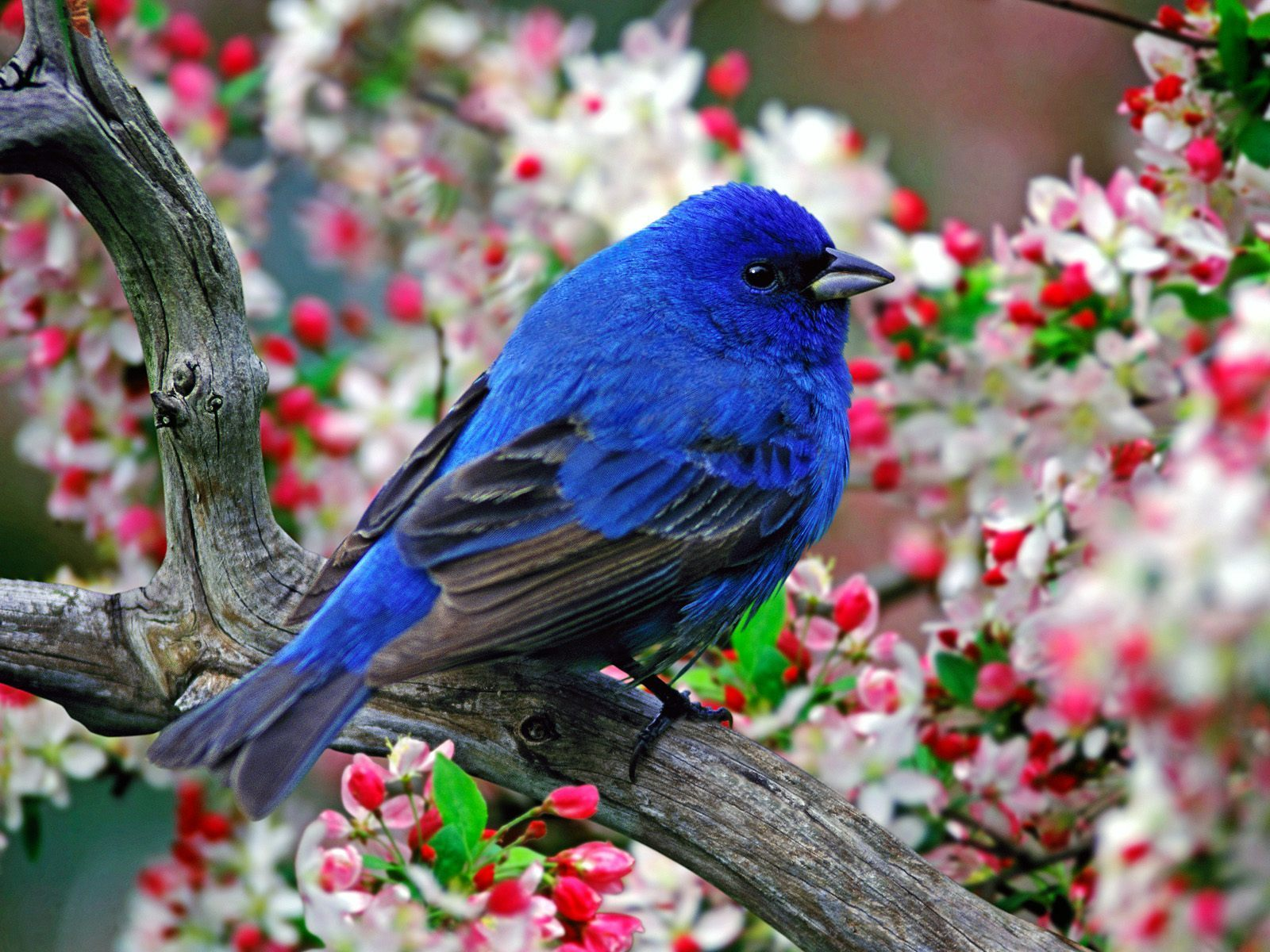 بالصور صور عصافير , اجمل صور عصافير ملونه 5696 4