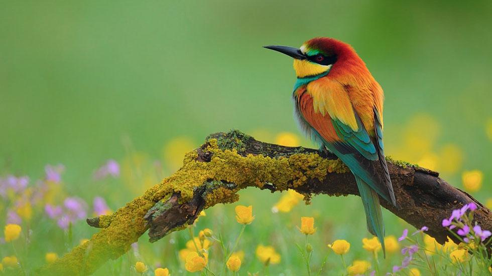 بالصور صور عصافير , اجمل صور عصافير ملونه 5696 6