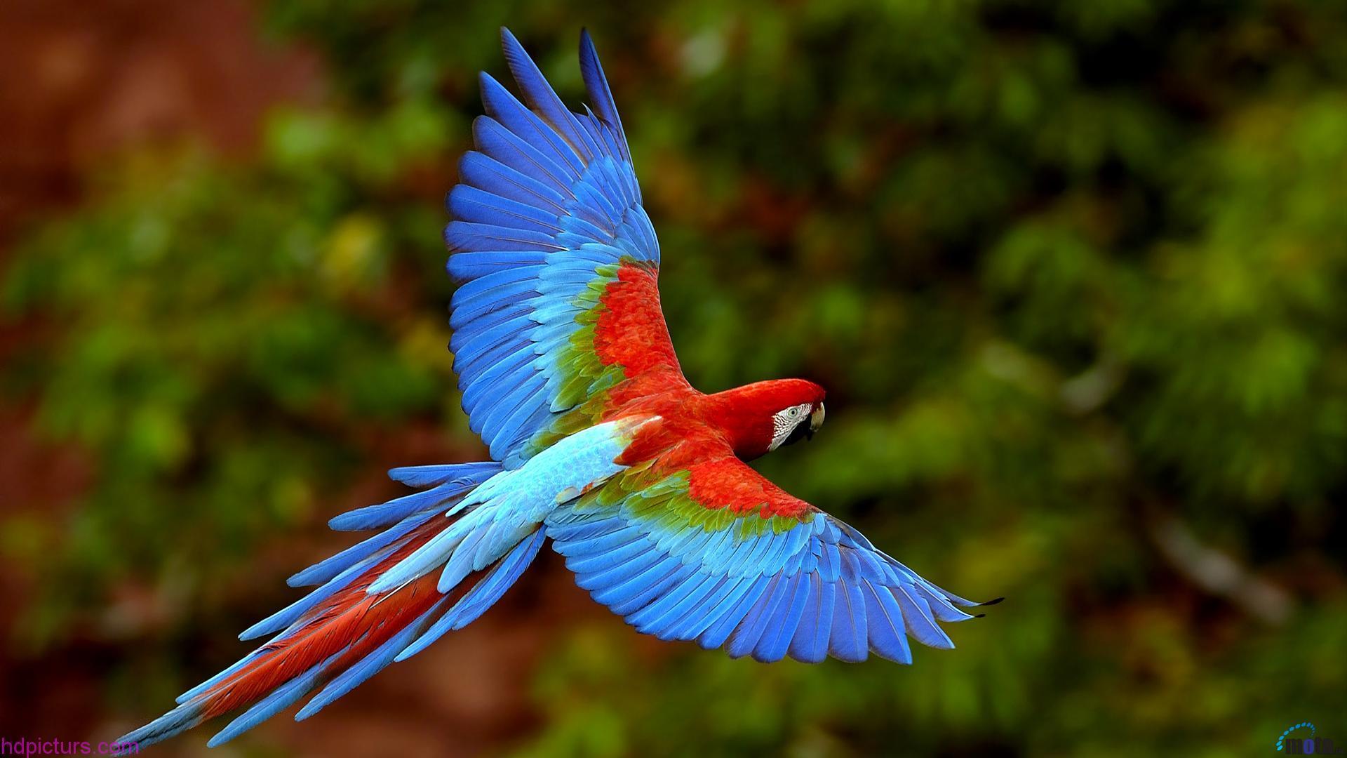 بالصور صور عصافير , اجمل صور عصافير ملونه 5696 7