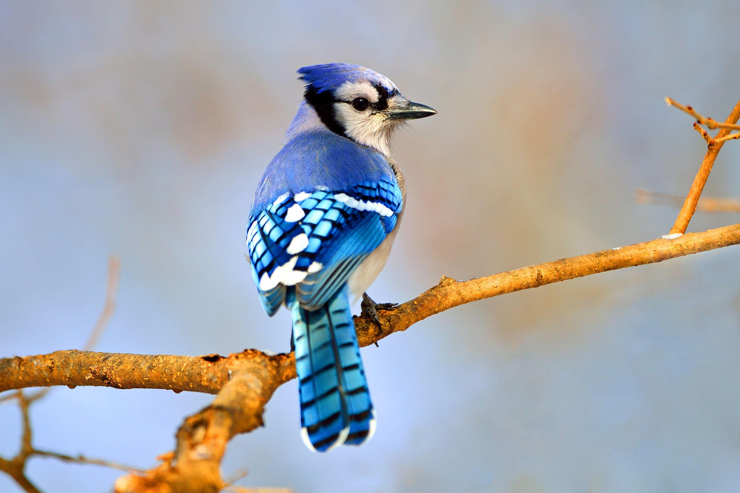 بالصور صور عصافير , اجمل صور عصافير ملونه 5696 8