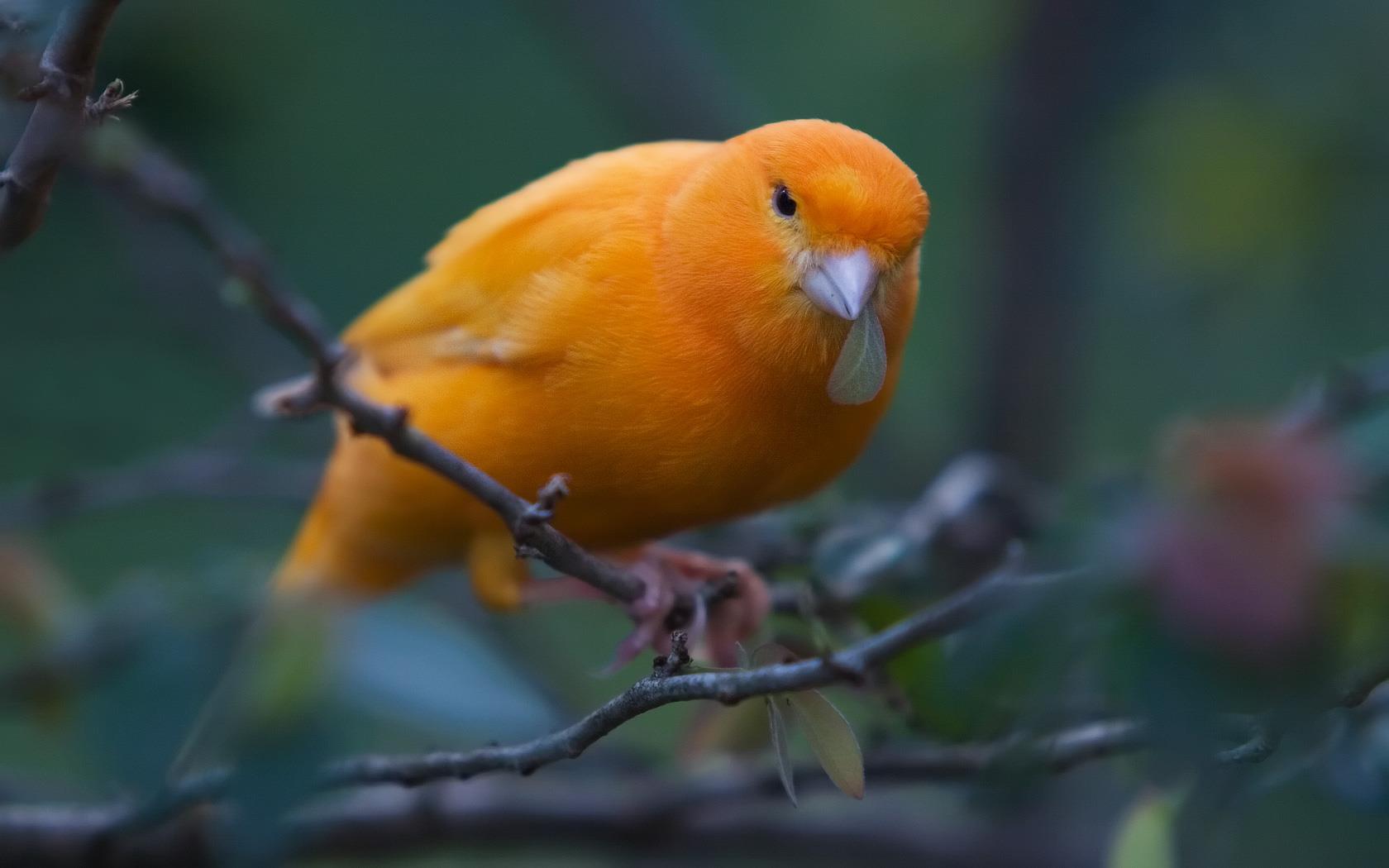بالصور صور عصافير , اجمل صور عصافير ملونه 5696 9