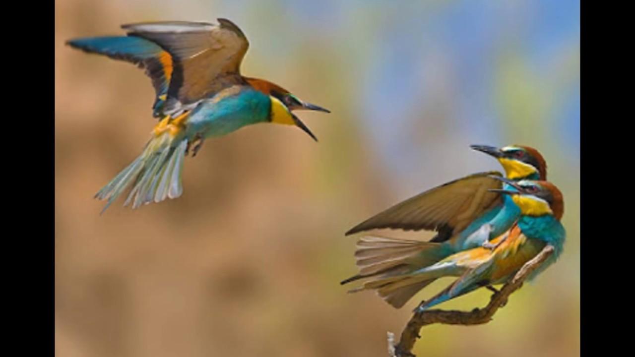 بالصور صور عصافير , اجمل صور عصافير ملونه 5696