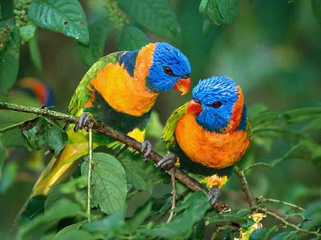 بالصور صور طيور , صور طيور غاية فى الجمال والروعة 131 1