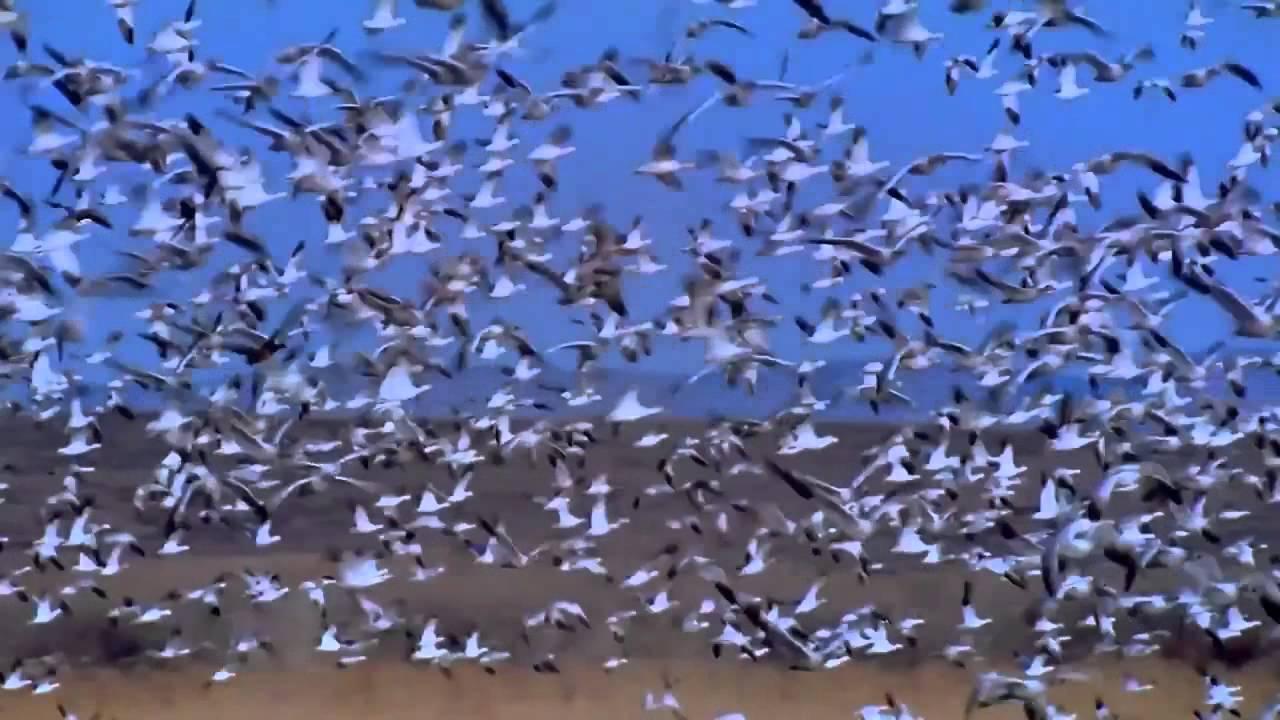 بالصور صور طيور , صور طيور غاية فى الجمال والروعة 131 10