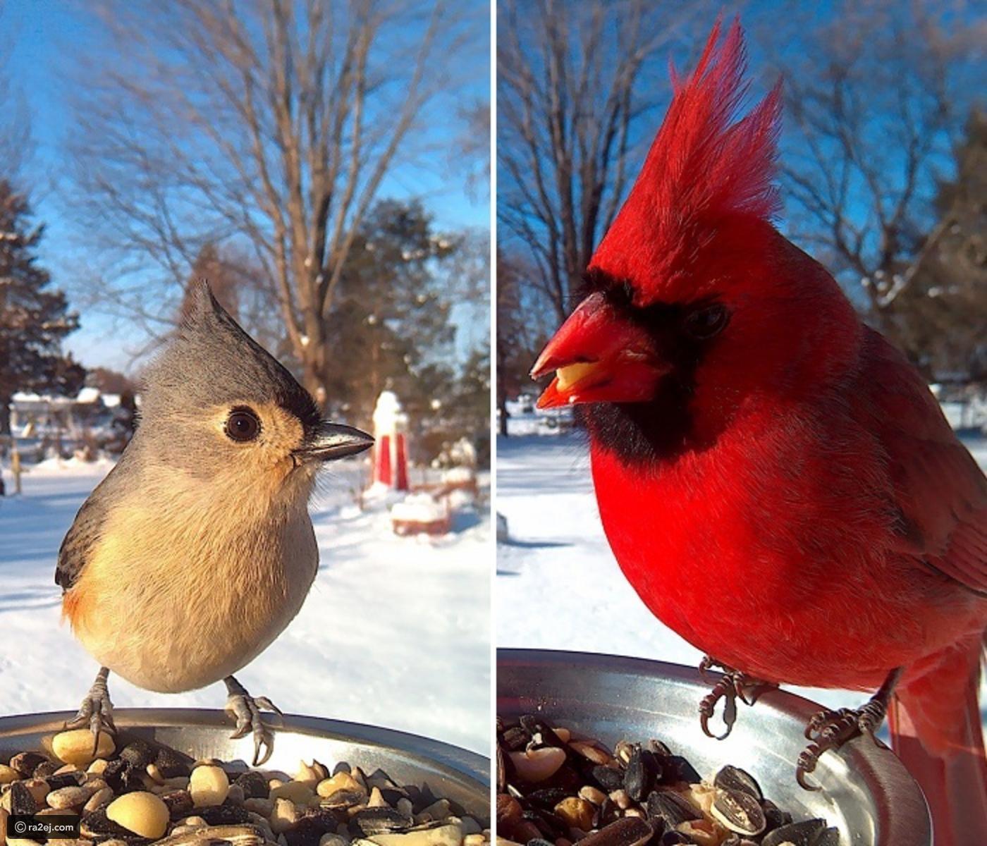 بالصور صور طيور , صور طيور غاية فى الجمال والروعة 131 12