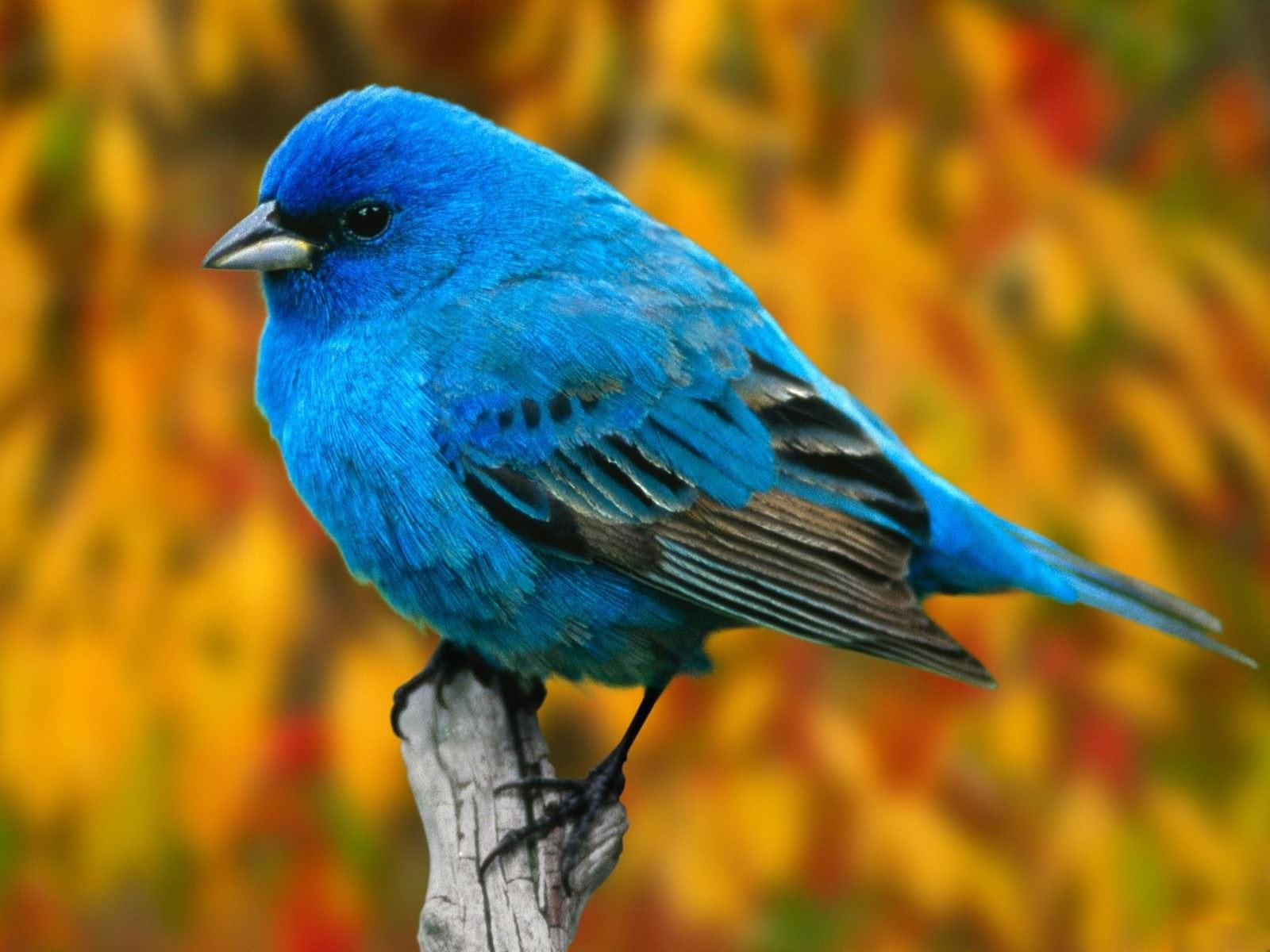 بالصور صور طيور , صور طيور غاية فى الجمال والروعة 131 14