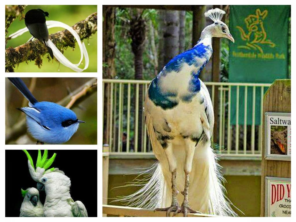بالصور صور طيور , صور طيور غاية فى الجمال والروعة 131 15