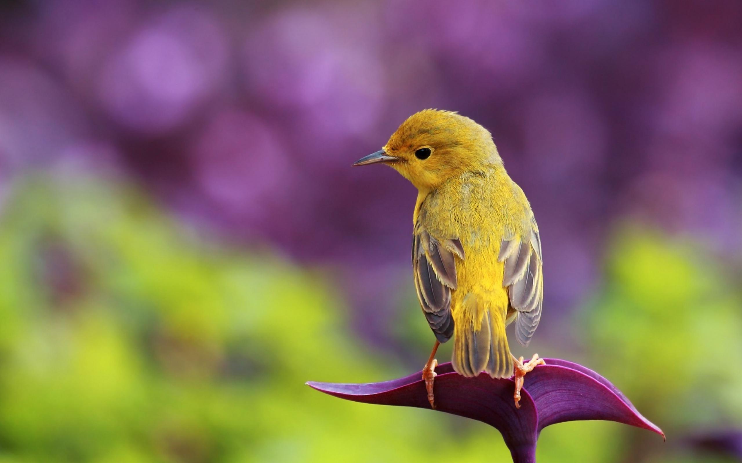 بالصور صور طيور , صور طيور غاية فى الجمال والروعة 131 2