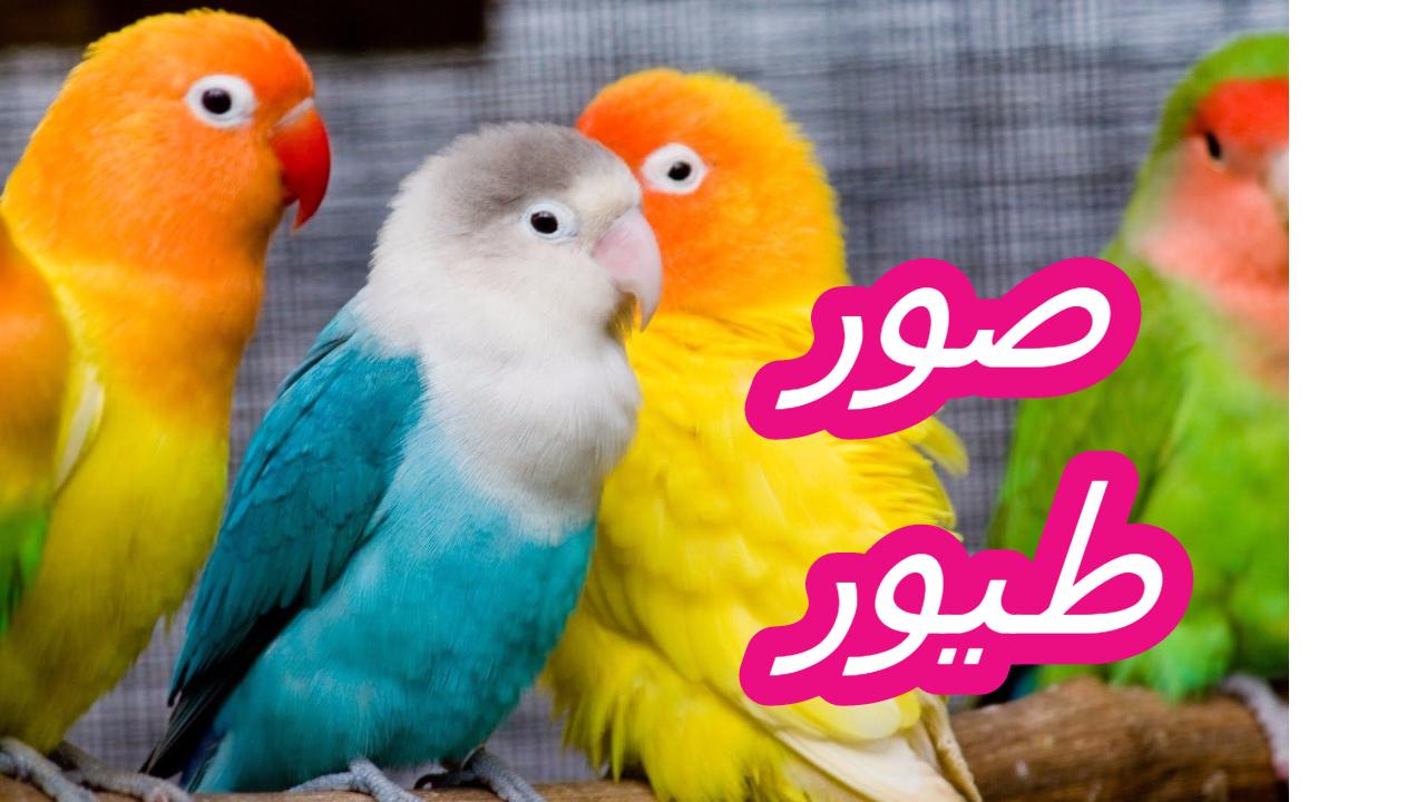 بالصور صور طيور , صور طيور غاية فى الجمال والروعة 131 3