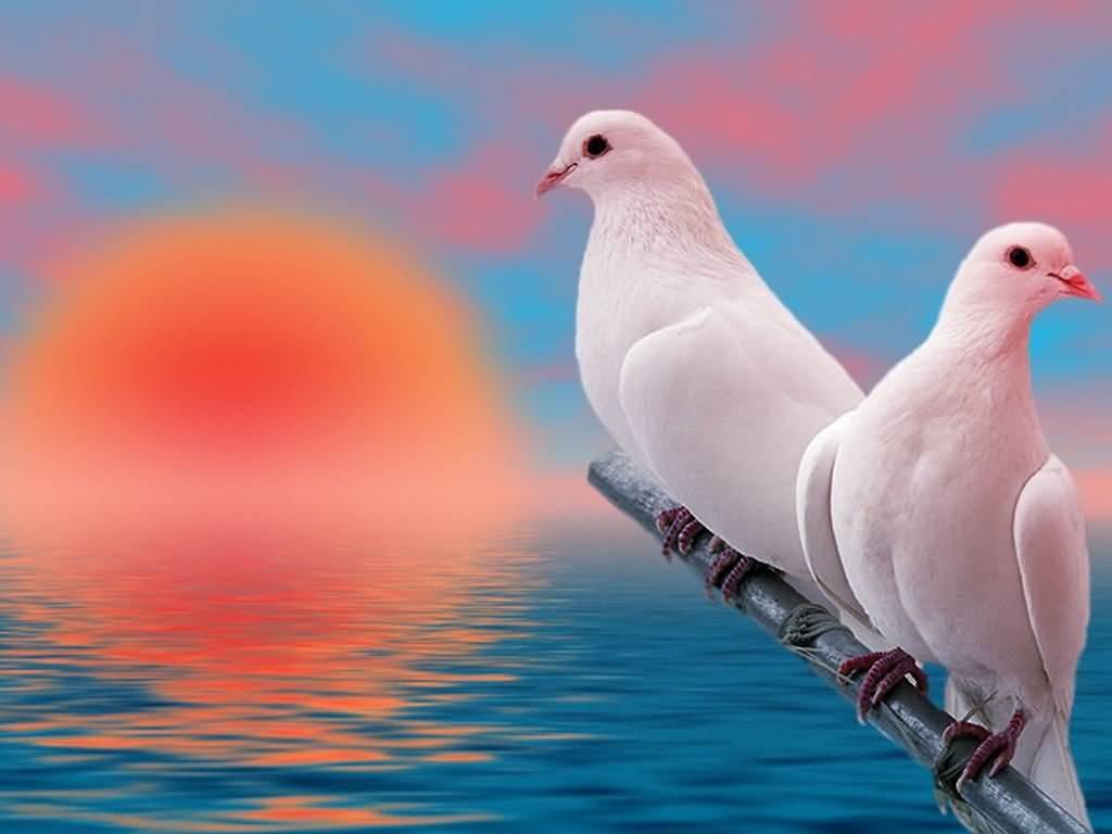 بالصور صور طيور , صور طيور غاية فى الجمال والروعة 131 4