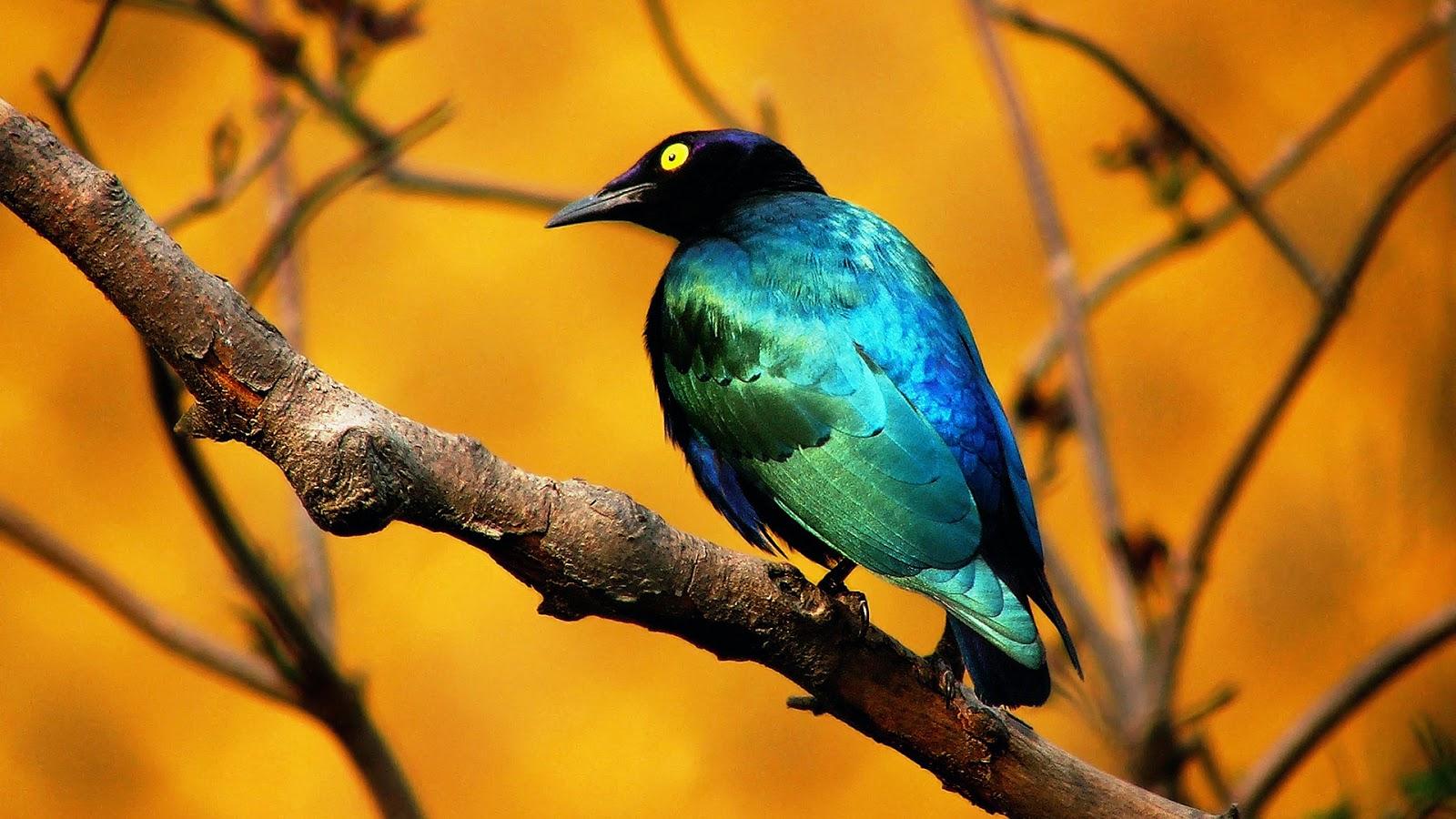 بالصور صور طيور , صور طيور غاية فى الجمال والروعة 131 5