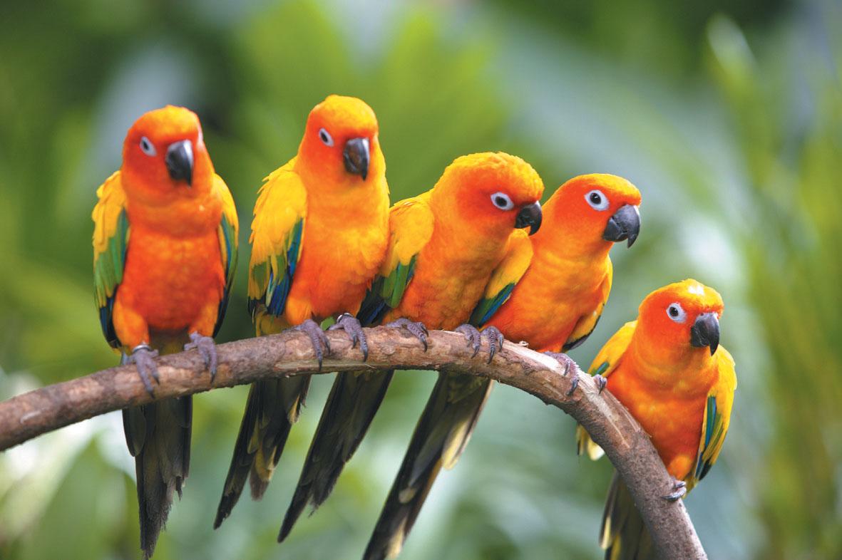 بالصور صور طيور , صور طيور غاية فى الجمال والروعة 131 6