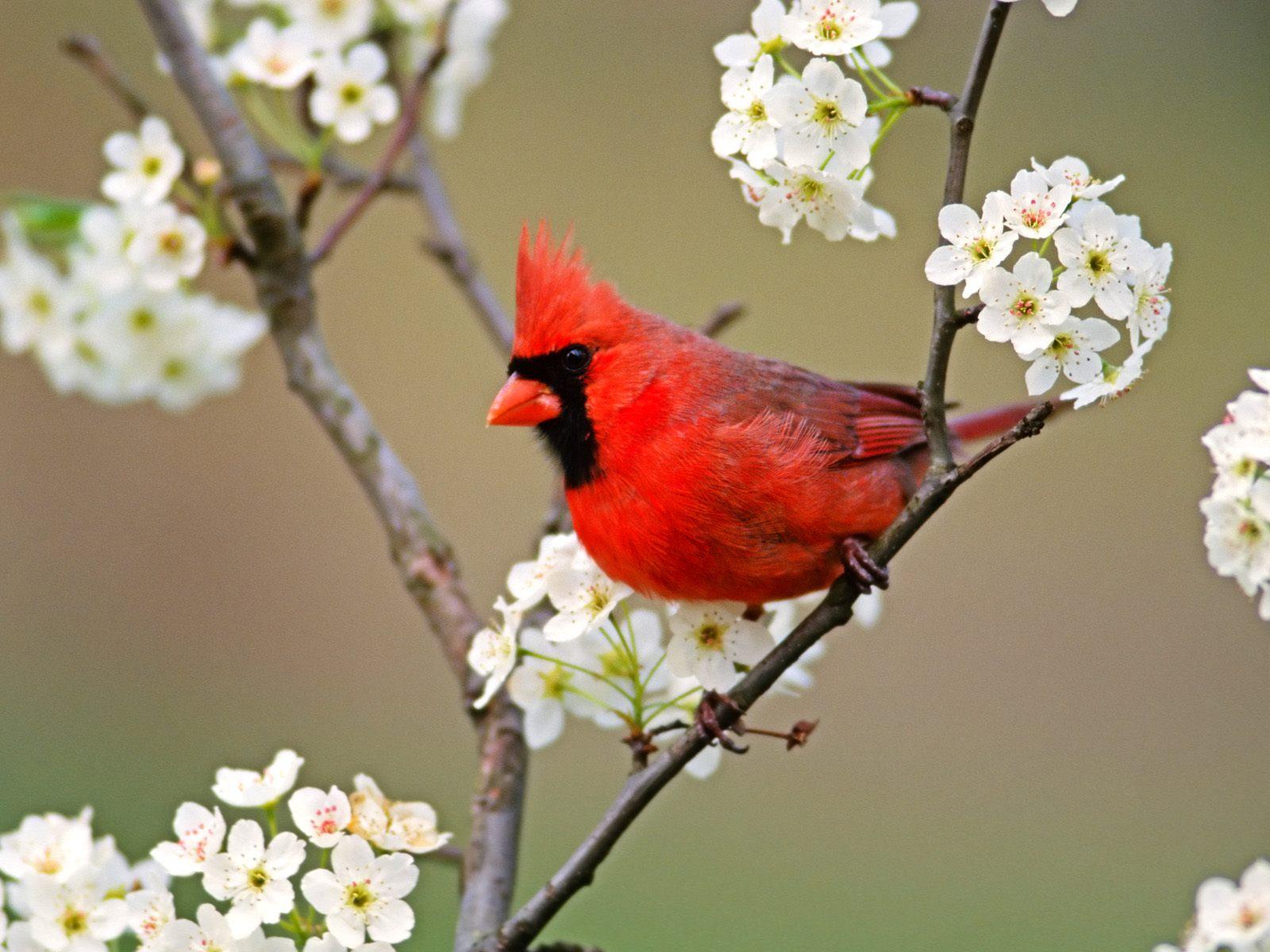 بالصور صور طيور , صور طيور غاية فى الجمال والروعة 131 7