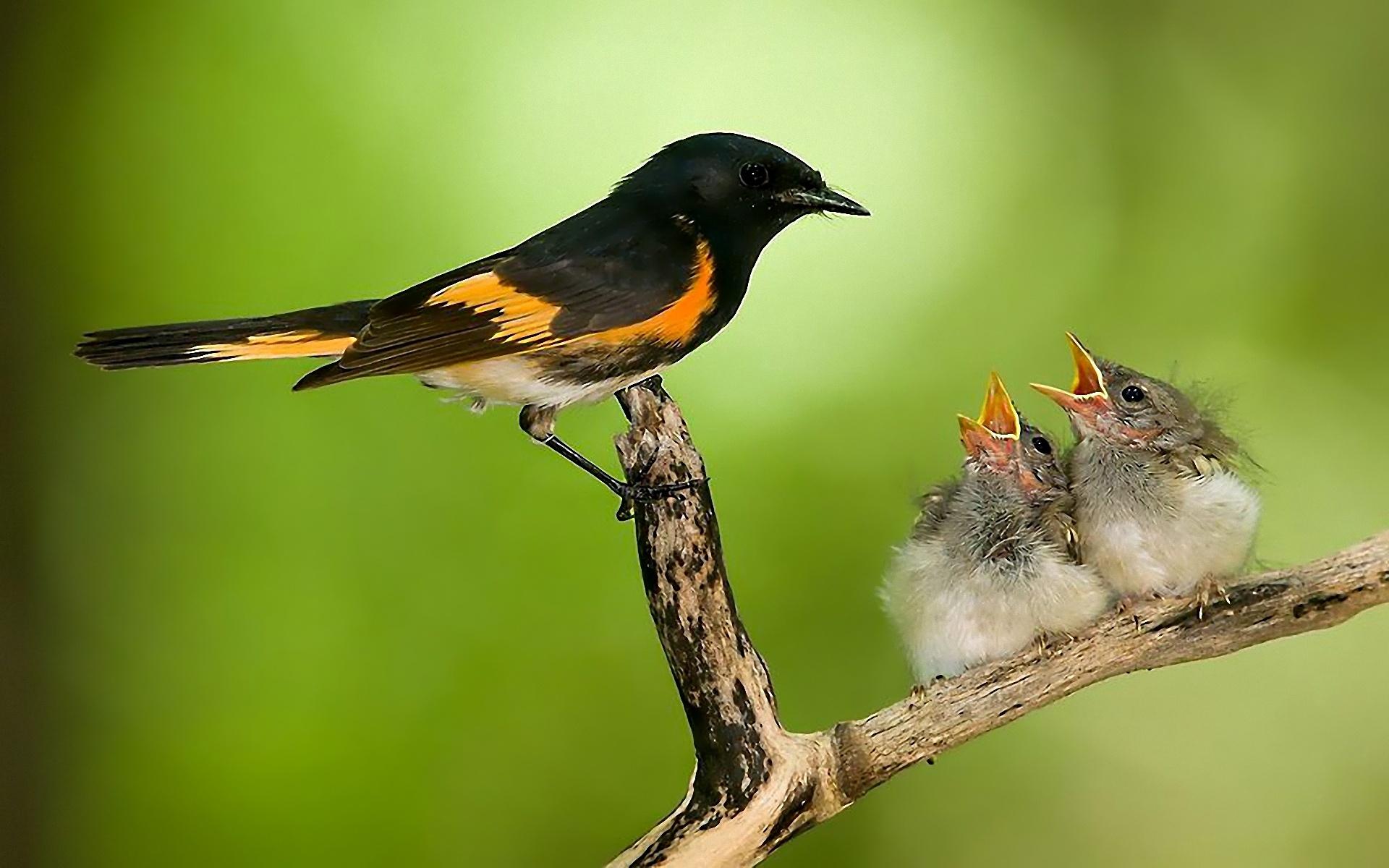 بالصور صور طيور , صور طيور غاية فى الجمال والروعة 131 9