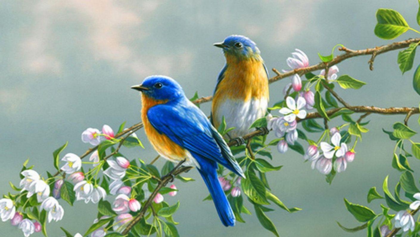 بالصور صور طيور , صور طيور غاية فى الجمال والروعة 131