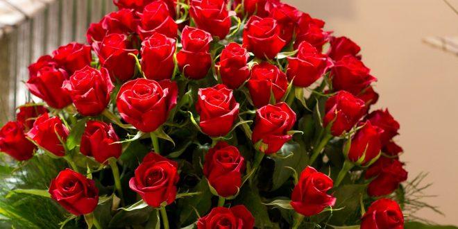 صور احلى صور ورد , اجمل واروع صور الورود فى العالم