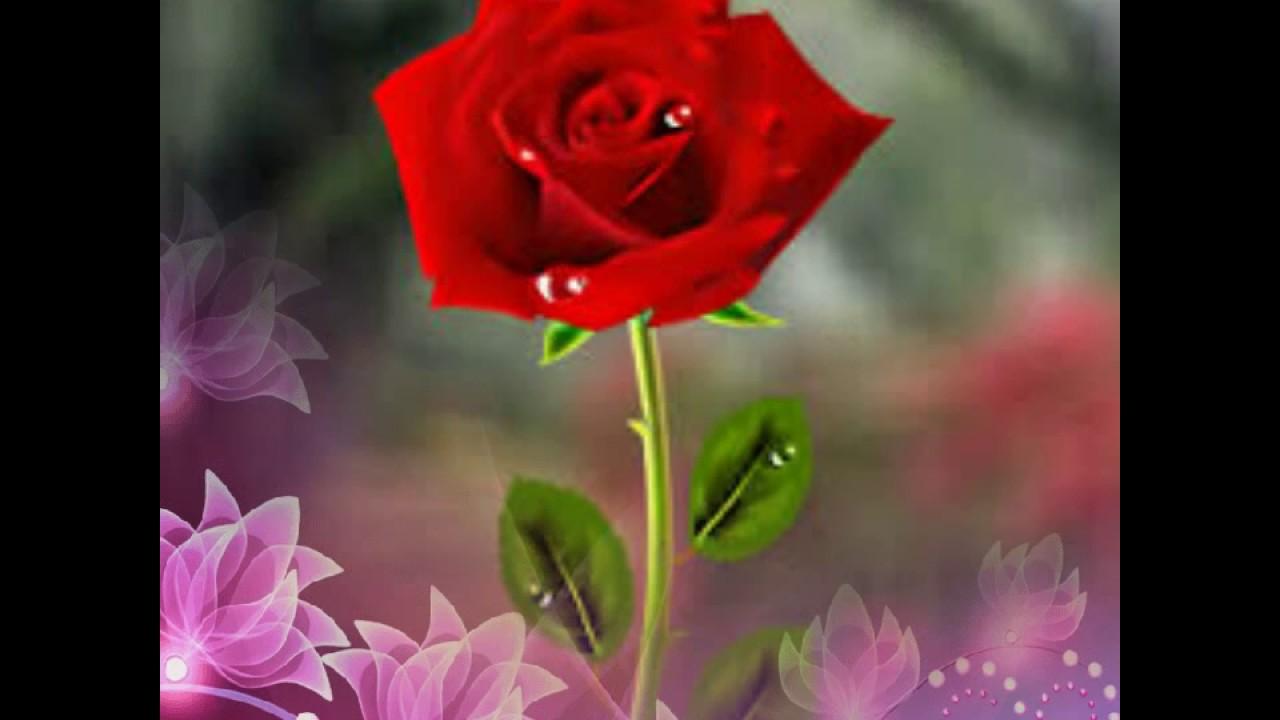 بالصور احلى صور ورد , اجمل واروع صور الورود فى العالم 5699 2