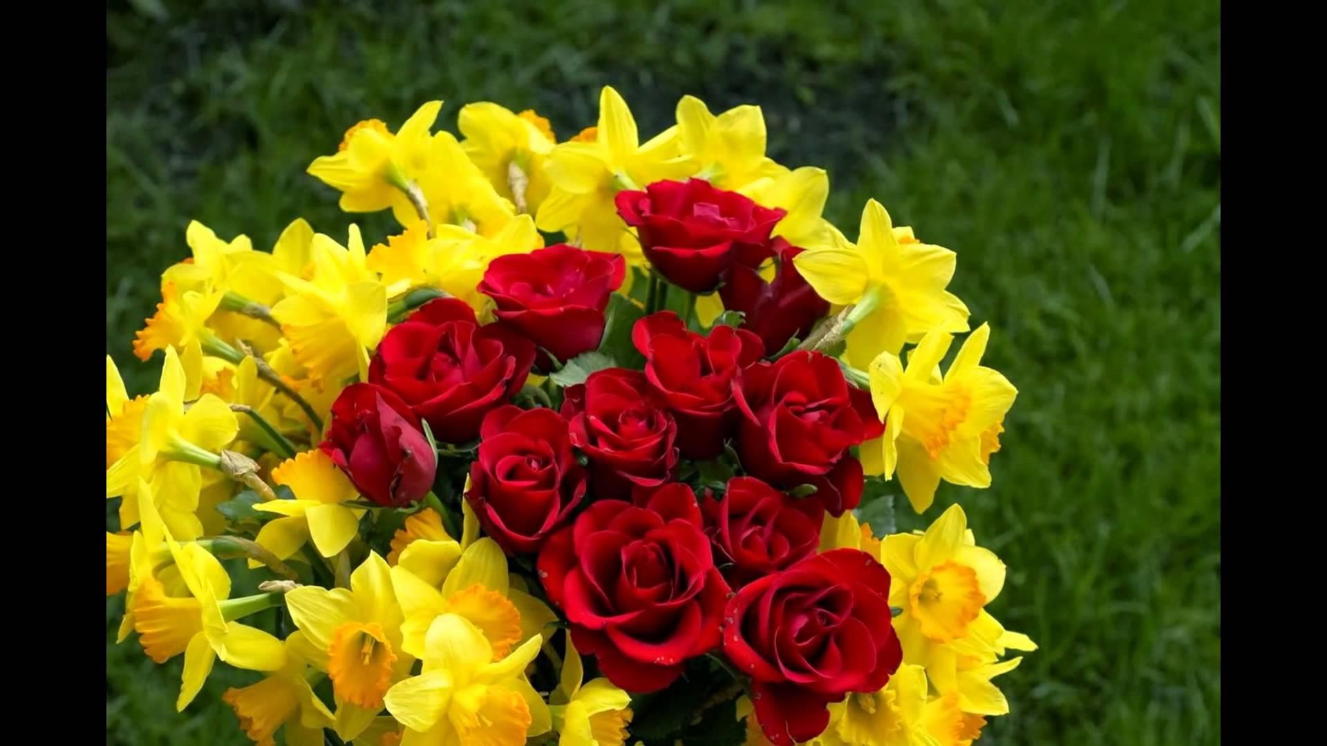 بالصور احلى صور ورد , اجمل واروع صور الورود فى العالم 5699 5