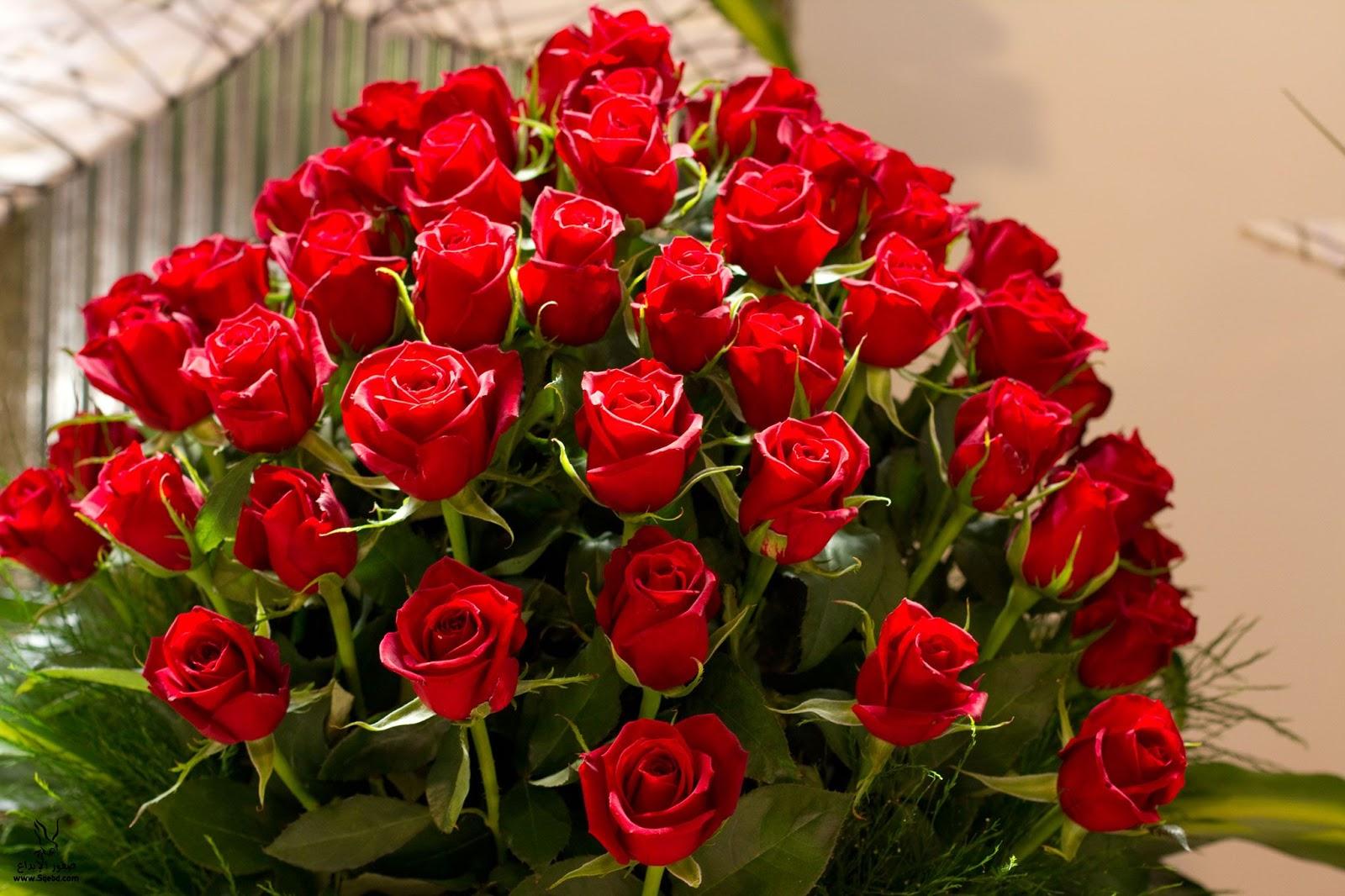 بالصور احلى صور ورد , اجمل واروع صور الورود فى العالم 5699
