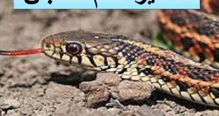 بالصور تفسير حلم الثعابين في البيت , معنى رؤيا الثعبان فى المنام 5811 3 310x165