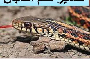 بالصور تفسير حلم الثعابين في البيت , معنى رؤيا الثعبان فى المنام 5811 3 310x205