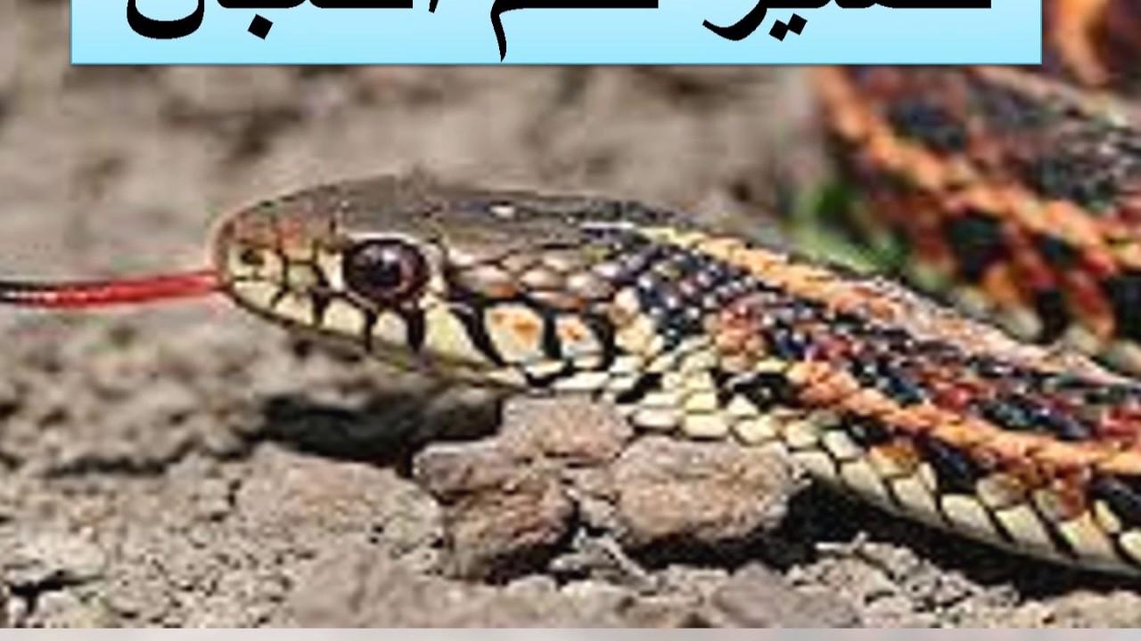 بالصور تفسير حلم الثعابين في البيت , معنى رؤيا الثعبان فى المنام 5811