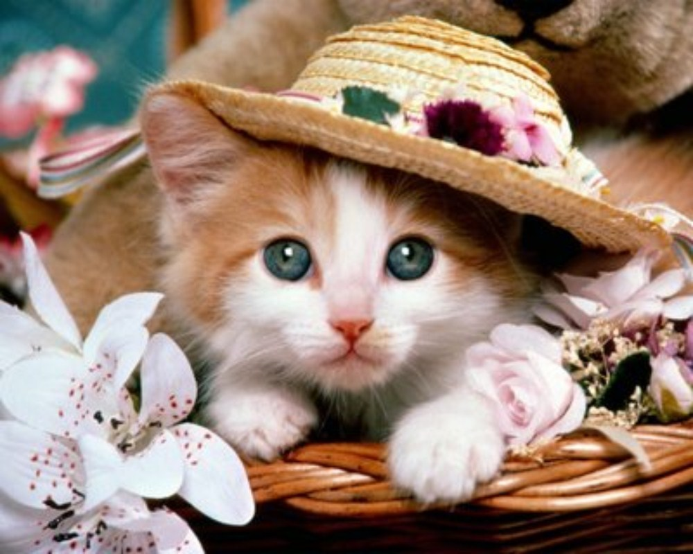 بالصور صور قطط متحركة , صور قطط كيوت 6317 1