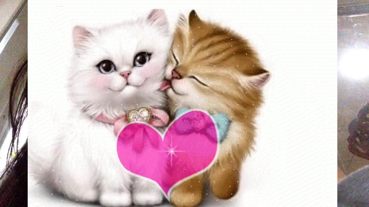 بالصور صور قطط متحركة , صور قطط كيوت 6317 10