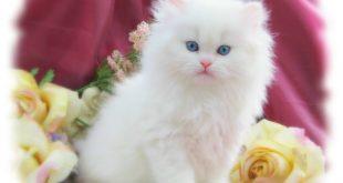 بالصور صور قطط متحركة , صور قطط كيوت 6317 11 310x165
