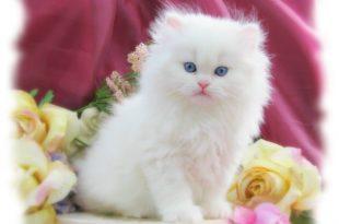 بالصور صور قطط متحركة , صور قطط كيوت 6317 11 310x205