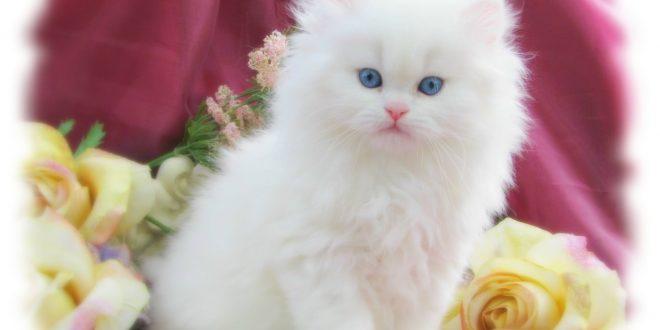 صور صور قطط متحركة , صور قطط كيوت