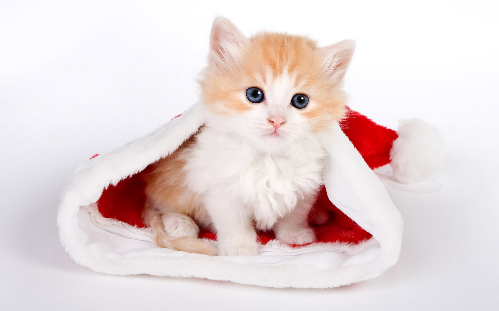 بالصور صور قطط متحركة , صور قطط كيوت 6317 2